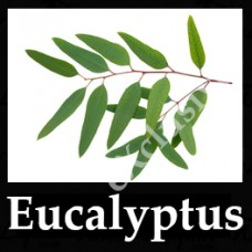 Eucalpytus 10ml NICOTINE FREE