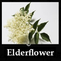 Elderflower 10ml NICOTINE FREE