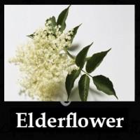 Elderflower 10ml NICOTINE FREE